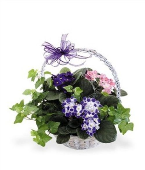 JQ Violet and Ivy Basket