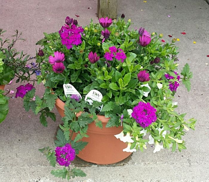 JGC Mixed Patio Planter