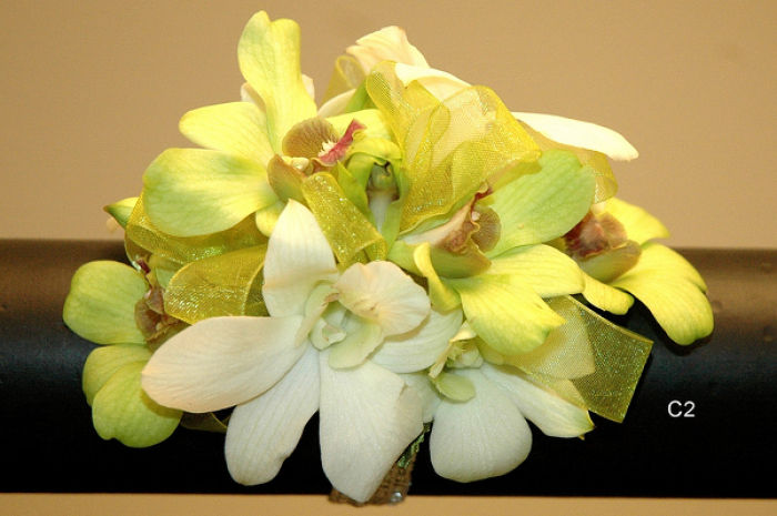 JQP Tropical Dendrobiums Wrist Corsage
