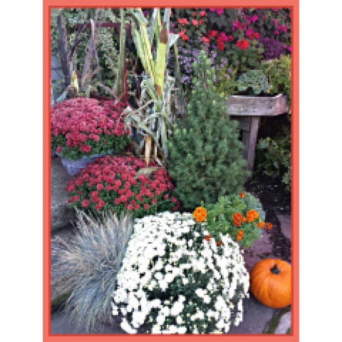 Autumn in the Garden Center